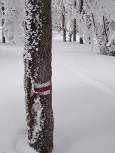 Czerwony szlak przez Kiczorę zimą